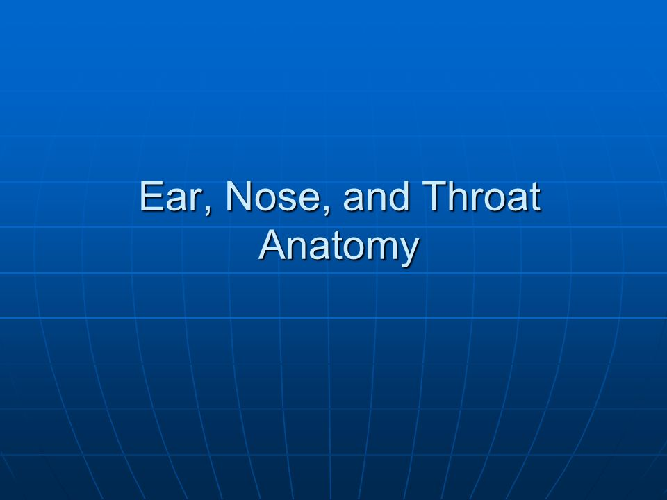 Ear, Nose, and Throat Anatomy