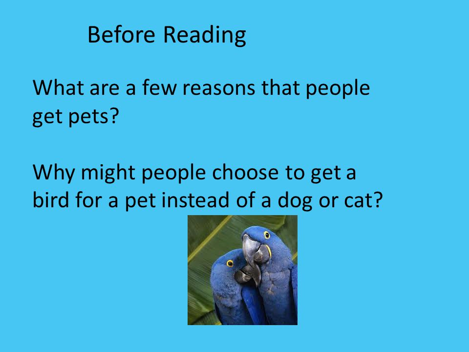 Before Reading What are a few reasons that people get pets