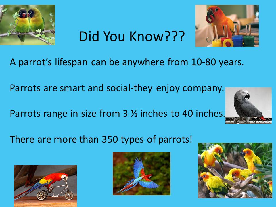 Did You Know A parrot's lifespan can be anywhere from 10-80 years.