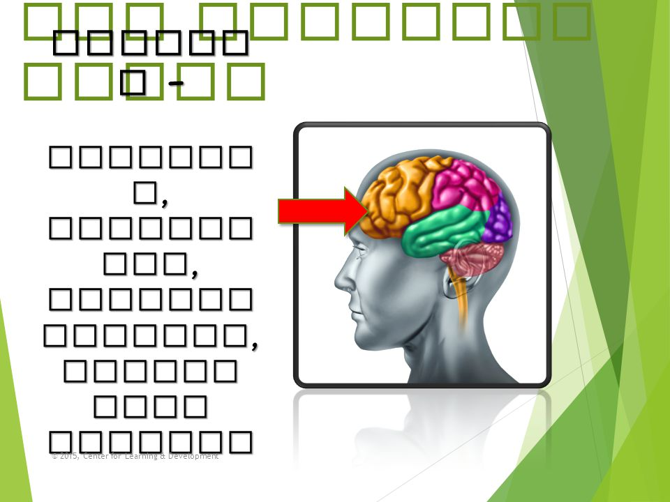 The Thinking Brain Frontal – planning, organizing, problem solving,