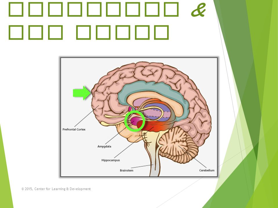 Agitation & the Brain What we know is that we THINK better when we FEEL calm and collected!