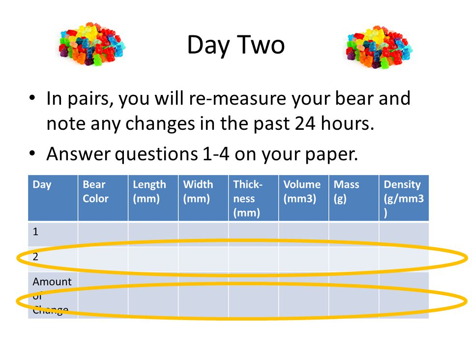 Day Two In pairs, you will re-measure your bear and note any changes in the past 24 hours.