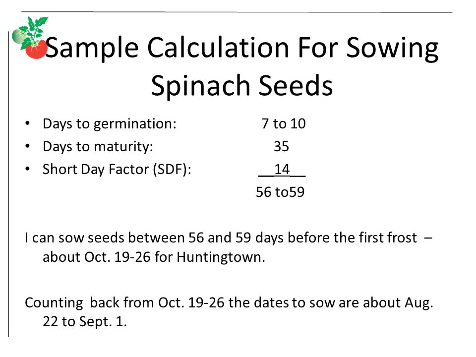 Sample Calculation For Sowing Spinach Seeds
