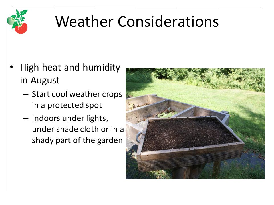 Weather Considerations