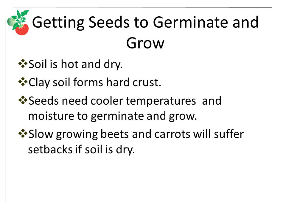 Getting Seeds to Germinate and Grow