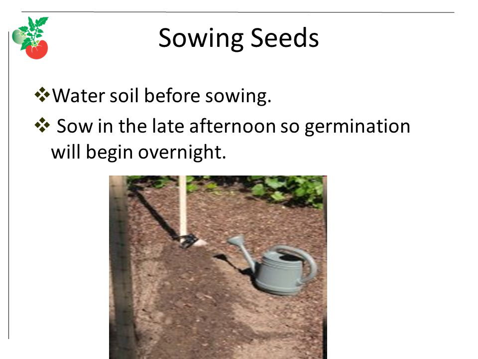 Sowing Seeds Water soil before sowing.