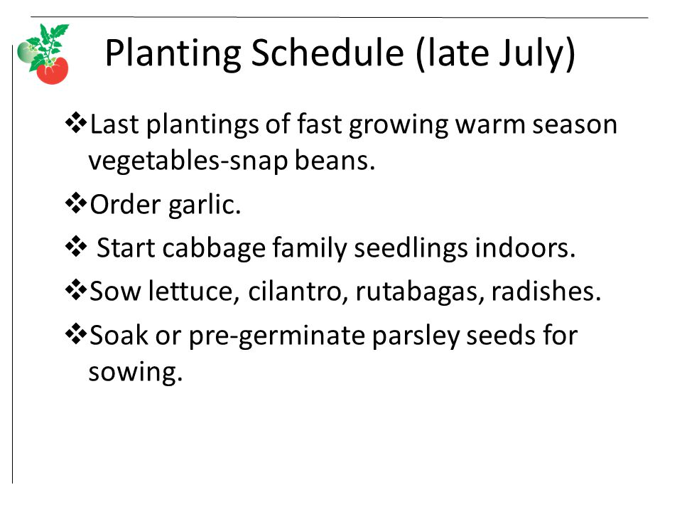 Planting Schedule (late July)