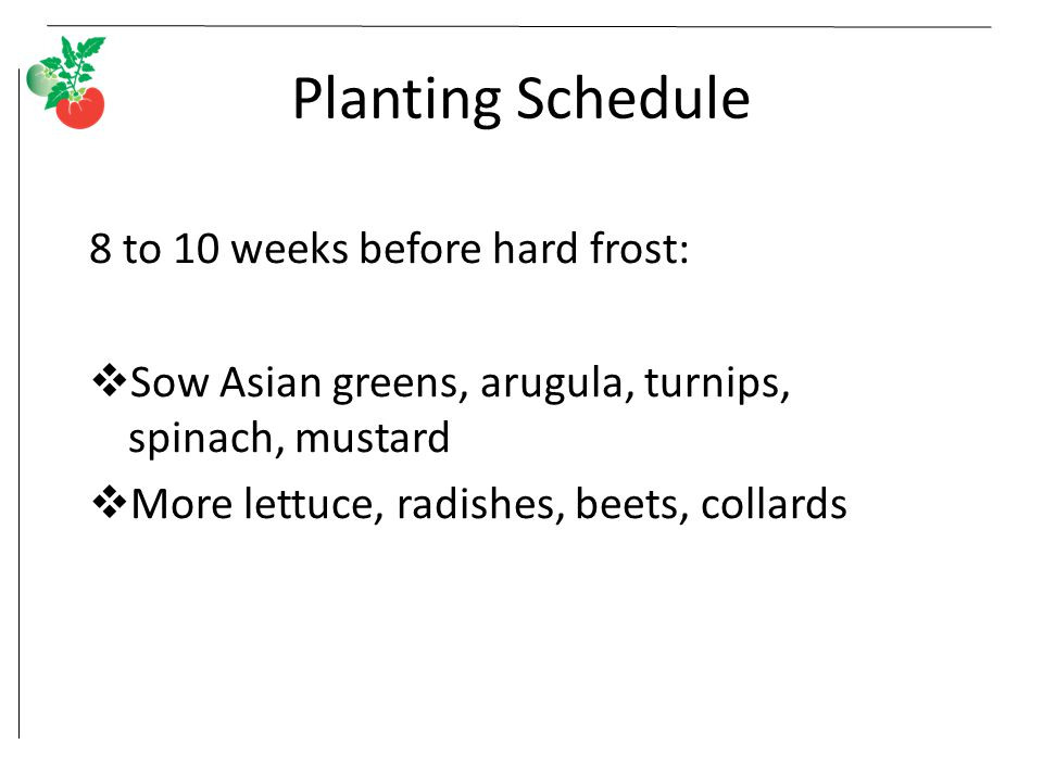 Planting Schedule 8 to 10 weeks before hard frost: