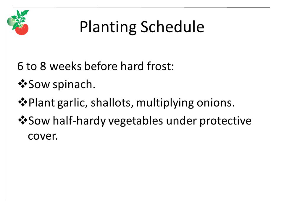 Planting Schedule 6 to 8 weeks before hard frost: Sow spinach.