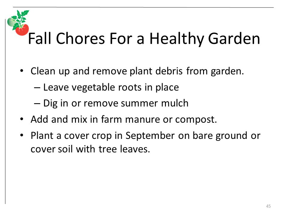 Fall Chores For a Healthy Garden