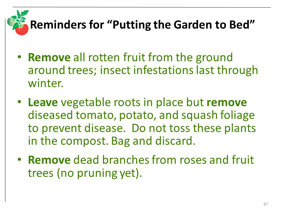 Reminders for Putting the Garden to Bed