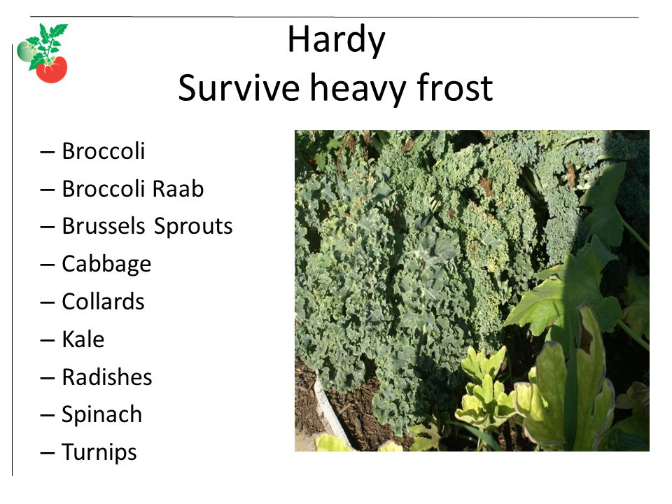 Hardy Survive heavy frost