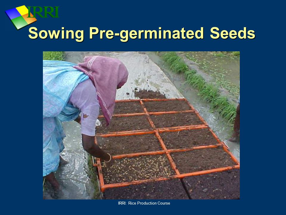Sowing Pre-germinated Seeds