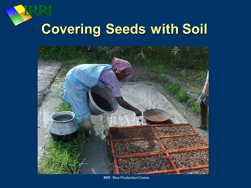 Covering Seeds with Soil