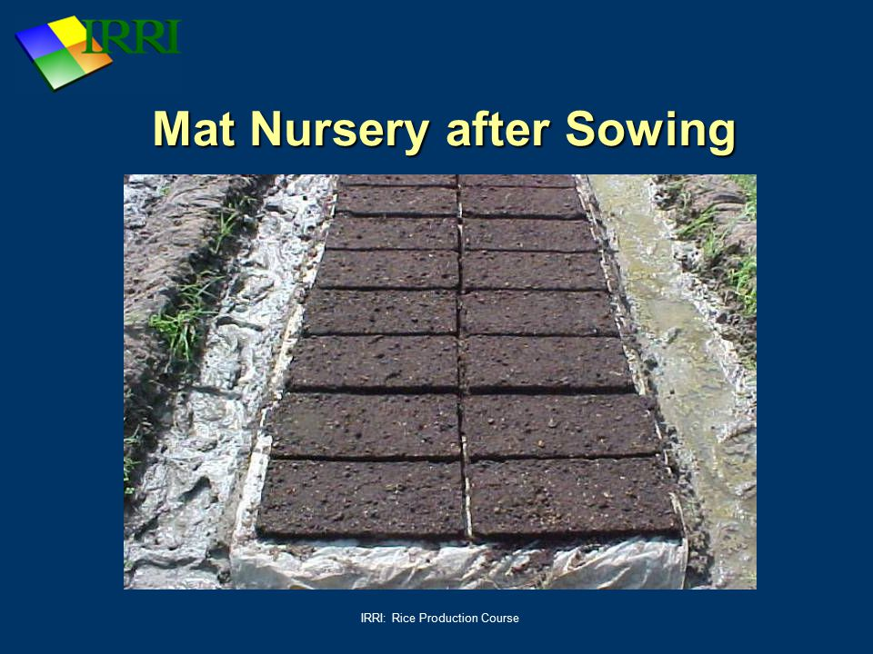 Mat Nursery after Sowing