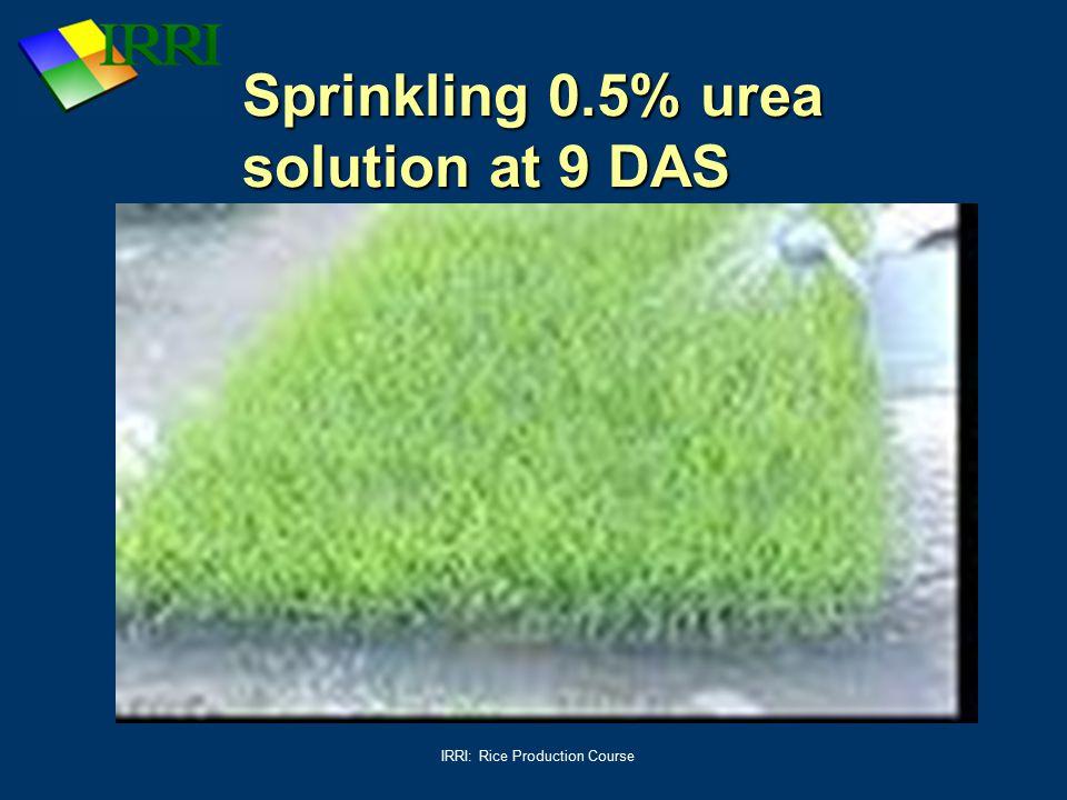 Sprinkling 0.5% urea solution at 9 DAS