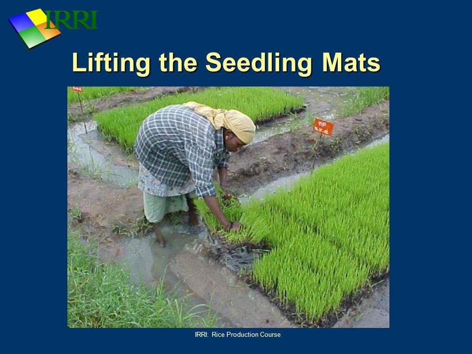 Lifting the Seedling Mats
