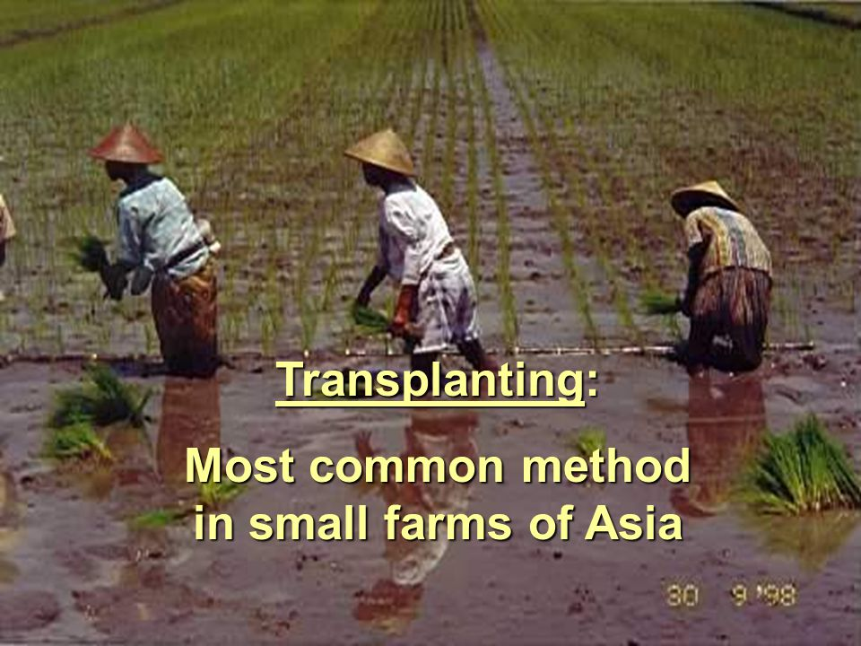 Most common method in small farms of Asia