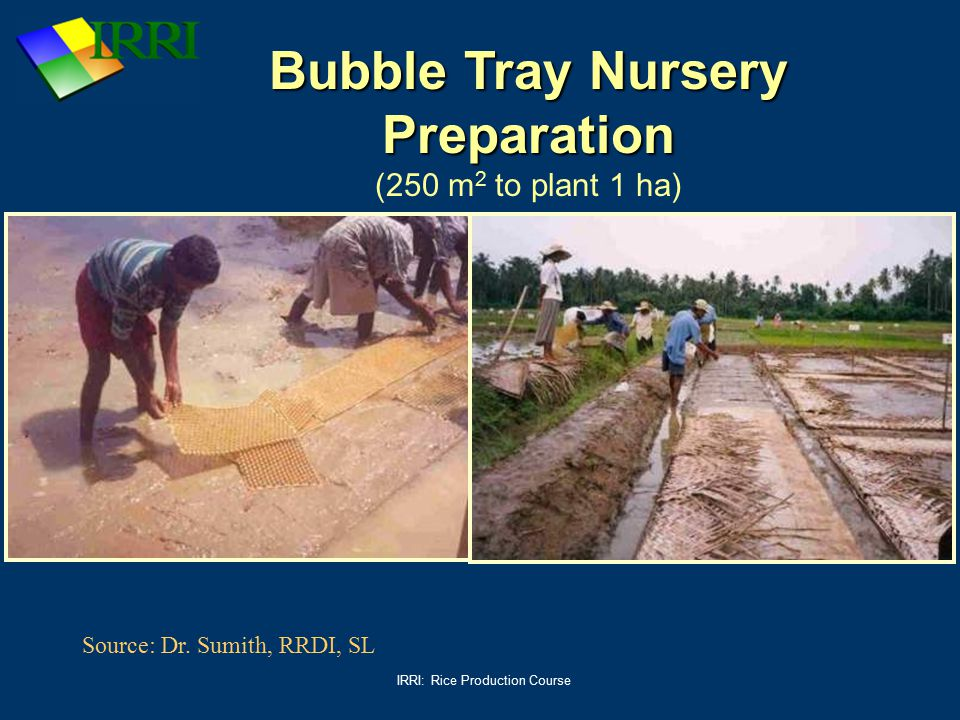 Bubble Tray Nursery Preparation (250 m2 to plant 1 ha)