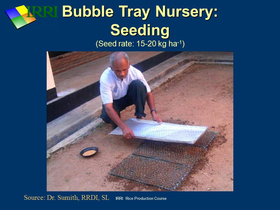 Bubble Tray Nursery: Seeding (Seed rate: 15-20 kg ha-1)