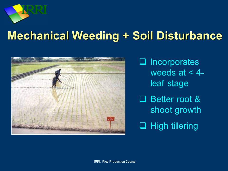 Mechanical Weeding + Soil Disturbance
