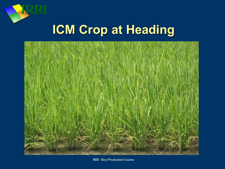 IRRI: Rice Production Course