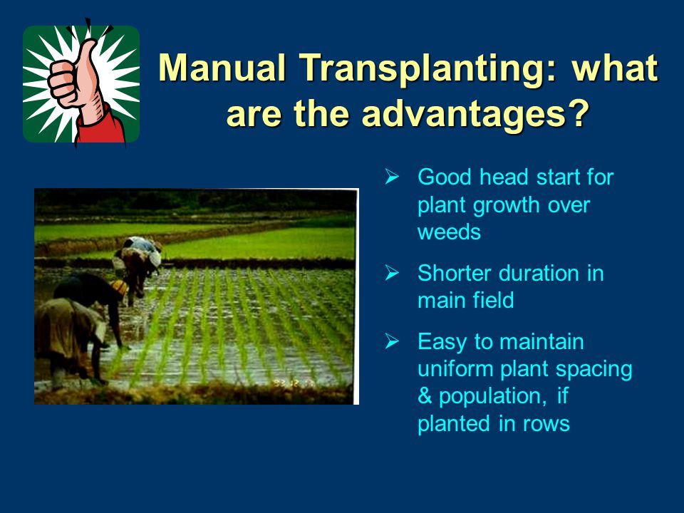 Manual Transplanting: what are the advantages