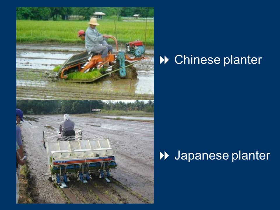  Chinese planter  Japanese planter