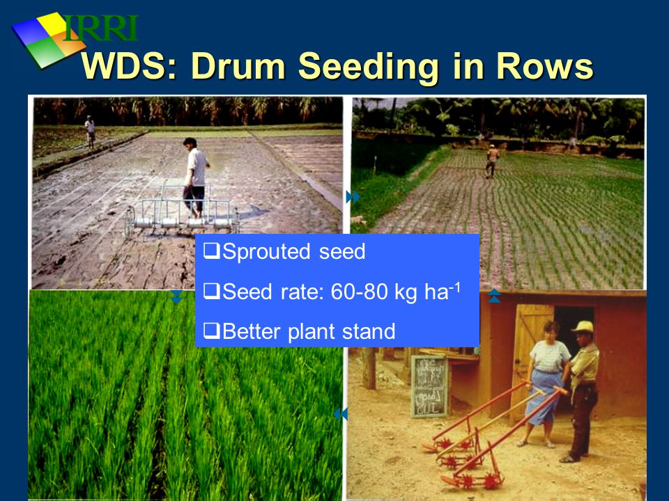 WDS: Drum Seeding in Rows