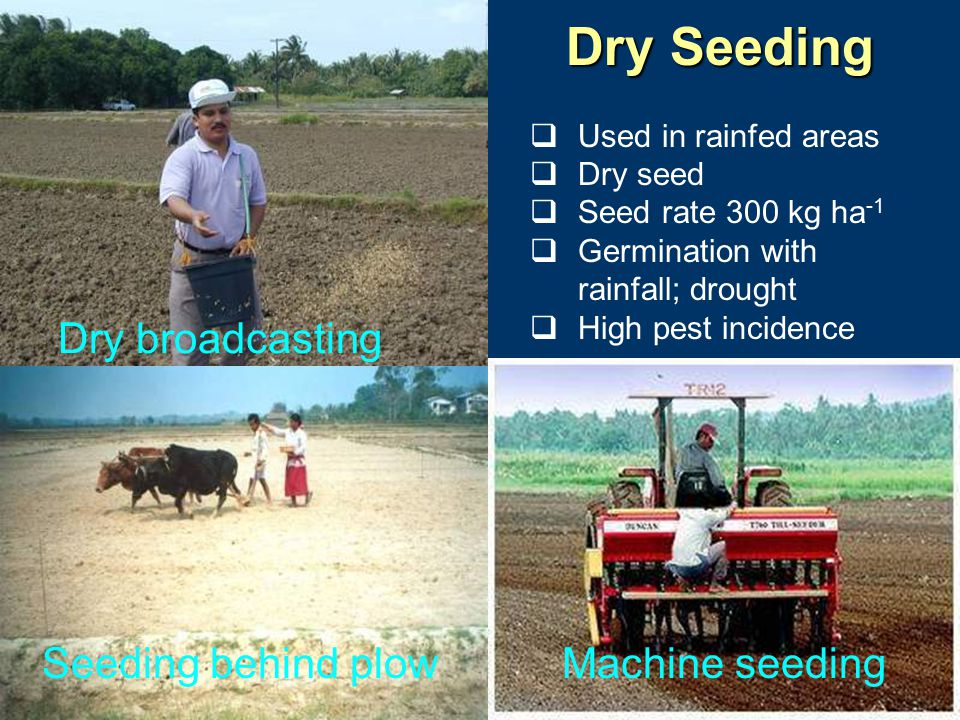 Dry Seeding Dry broadcasting Seeding behind plow Machine seeding