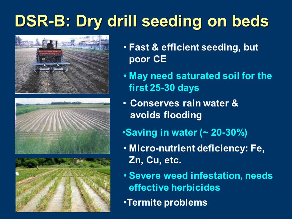 DSR-B: Dry drill seeding on beds