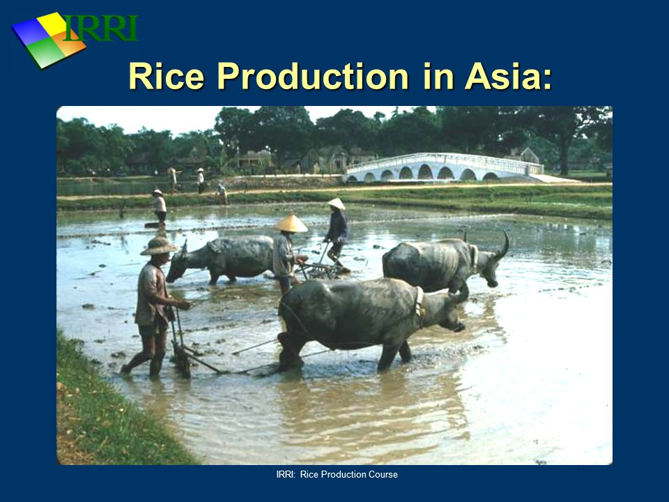 Rice Production in Asia: Puddling