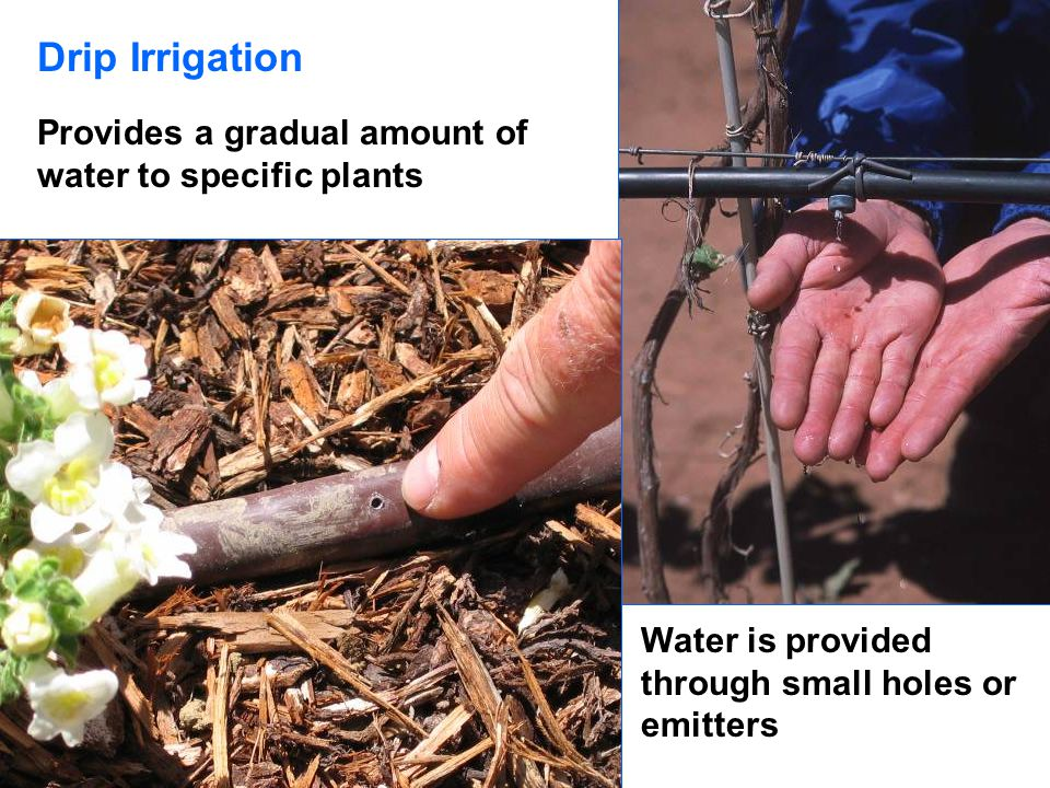 Drip Irrigation Provides a gradual amount of water to specific plants