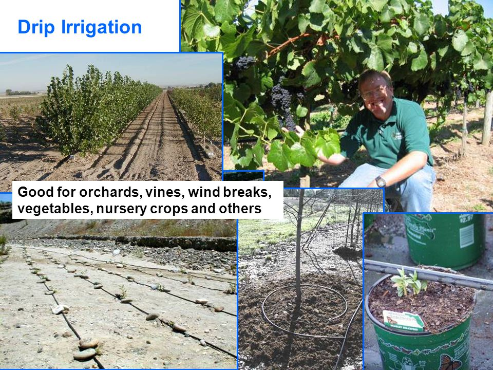 Drip Irrigation Good for orchards, vines, wind breaks, vegetables, nursery crops and others