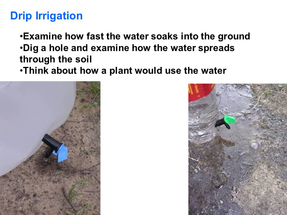 Drip Irrigation Examine how fast the water soaks into the ground