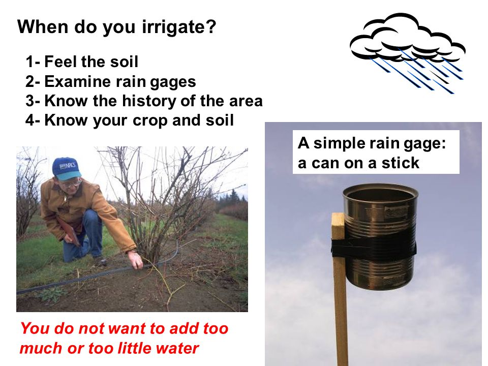 When do you irrigate 1- Feel the soil 2- Examine rain gages