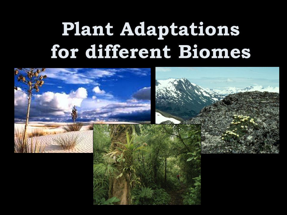 Plant Adaptations for different Biomes