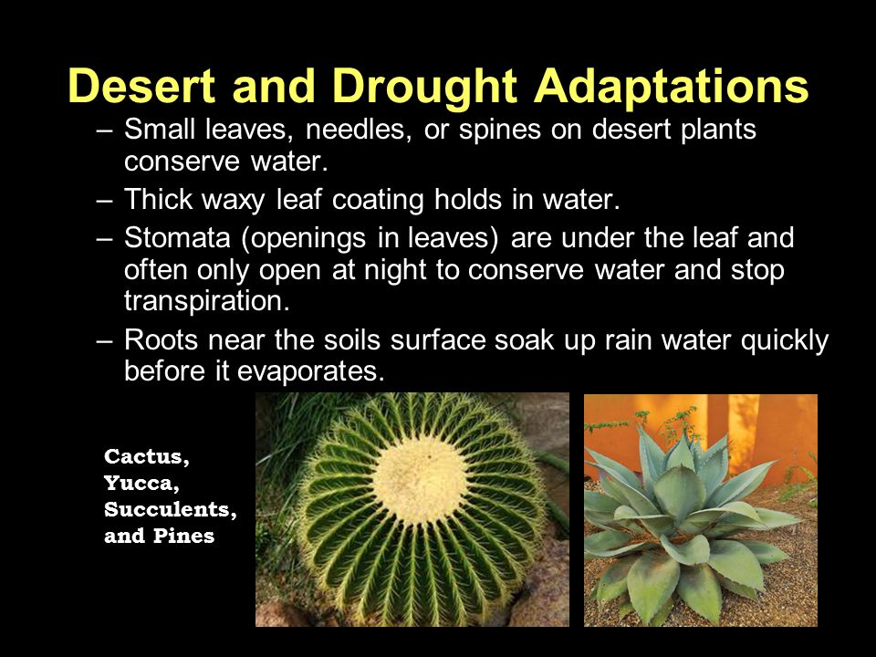 Desert and Drought Adaptations