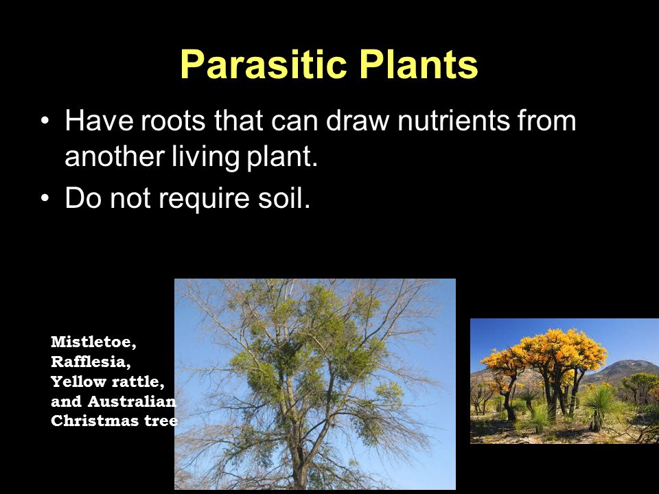 Parasitic Plants Have roots that can draw nutrients from another living plant. Do not require soil.