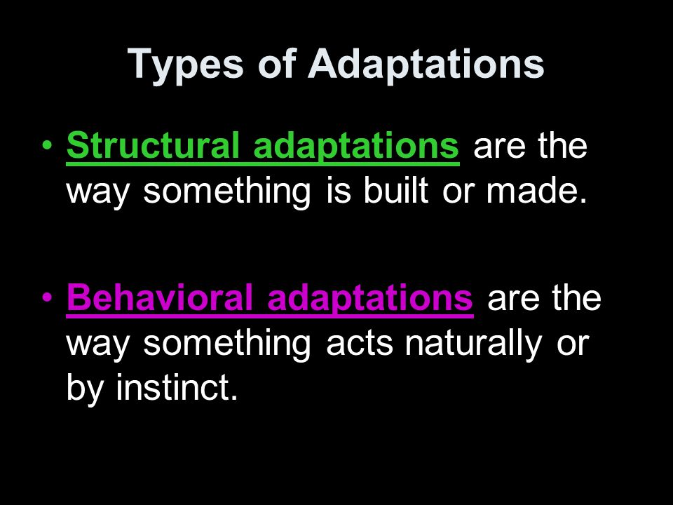 Types of Adaptations Structural adaptations are the way something is built or made.