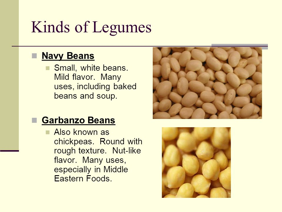 Kinds of Legumes Navy Beans Garbanzo Beans