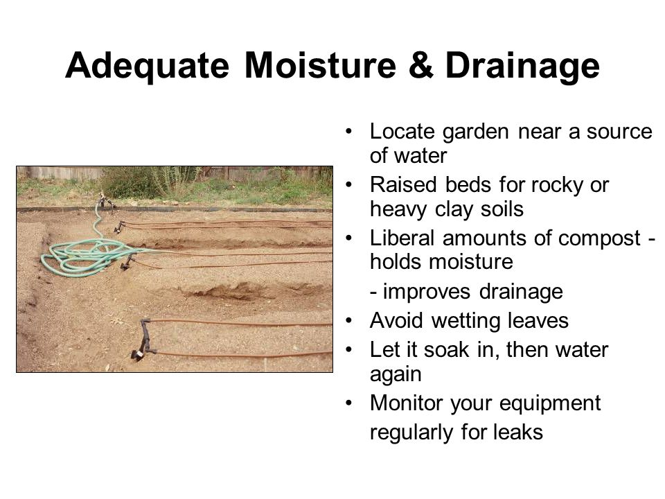 Adequate Moisture & Drainage