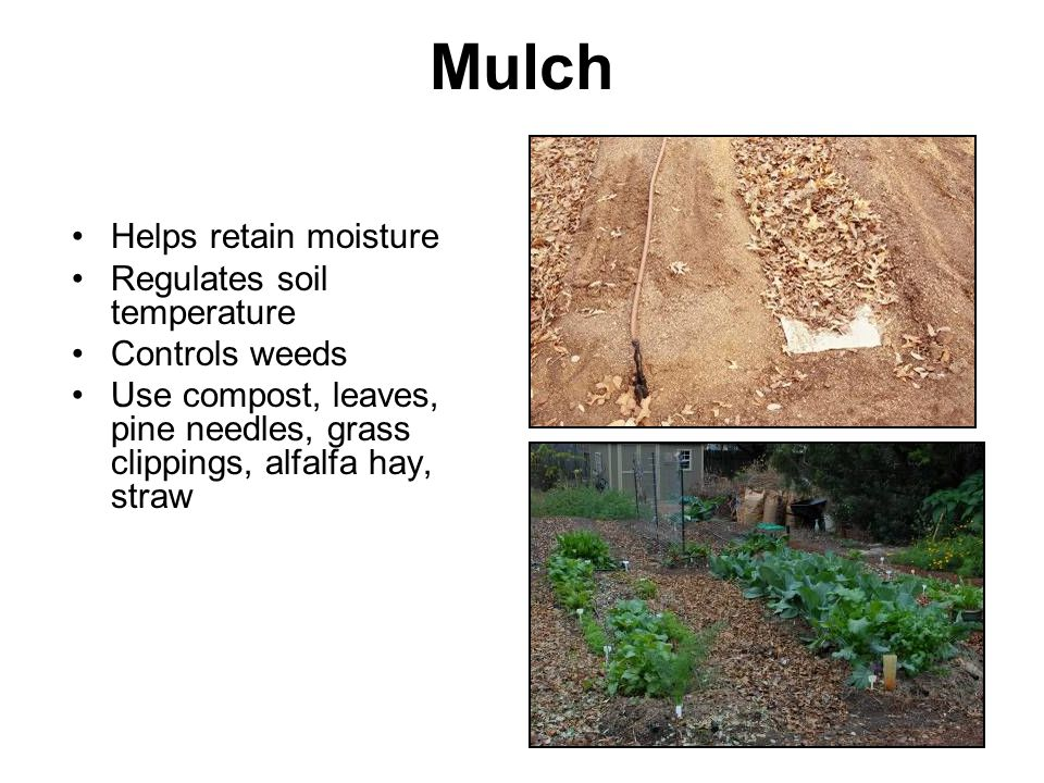 Mulch Helps retain moisture Regulates soil temperature Controls weeds