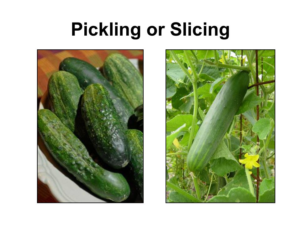 Pickling or Slicing