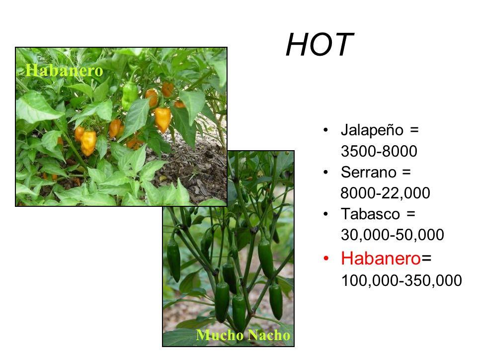 HOT Habanero Habanero= Jalapeño = 3500-8000 Serrano = 8000-22,000