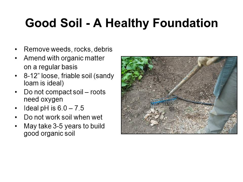 Good Soil - A Healthy Foundation