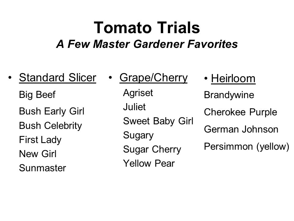 Tomato Trials A Few Master Gardener Favorites