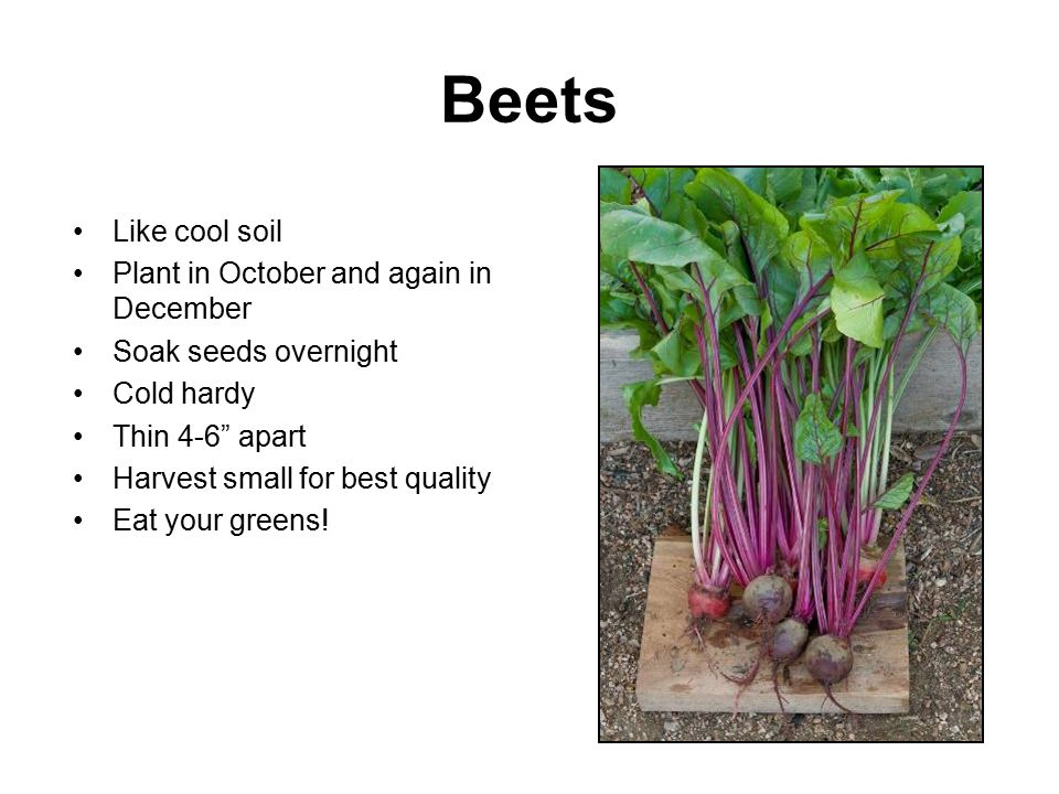 Beets Like cool soil Plant in October and again in December