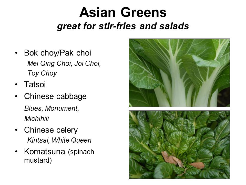 Asian Greens great for stir-fries and salads