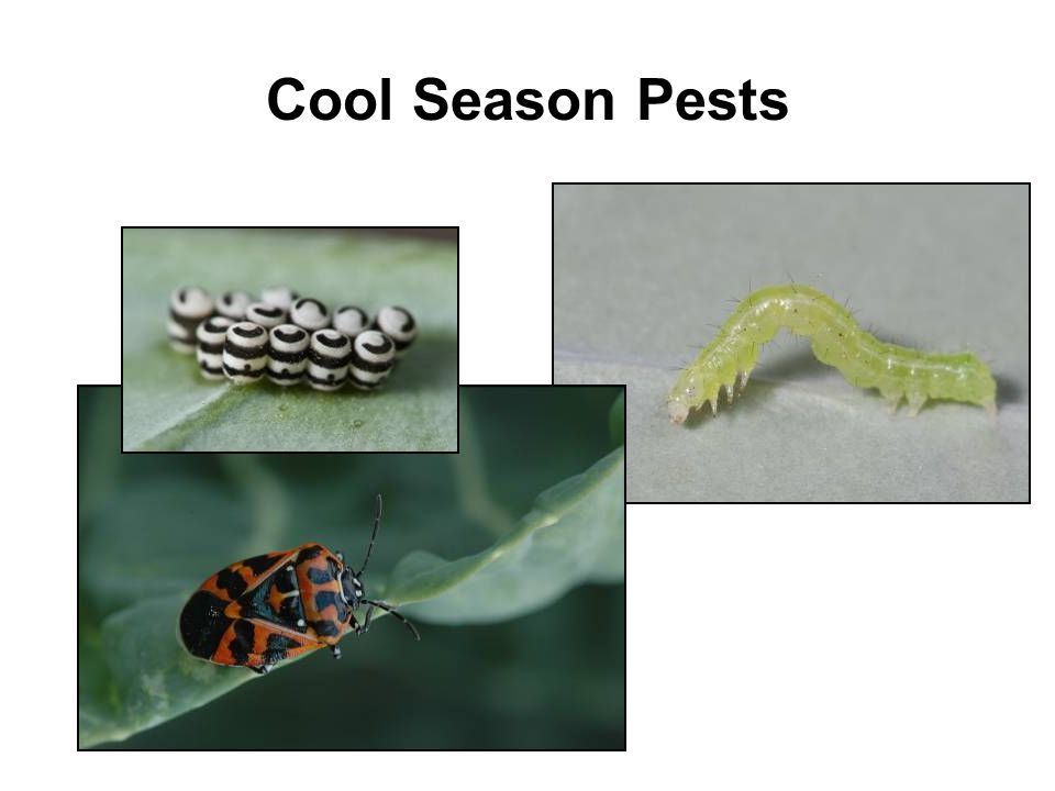Cool Season Pests